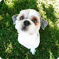 Adopt A Pet :: Aloha - La Mirada, CA