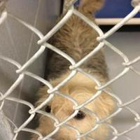 Adopt A Pet :: Biscuit - Savannah, TN