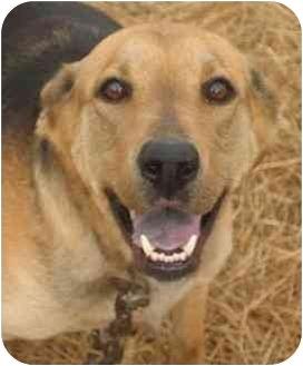 German Shepherd Dog Mix Dog for adoption in Sealy, Texas - Samantha