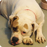 Adopt A Pet :: Susie - Prole, IA
