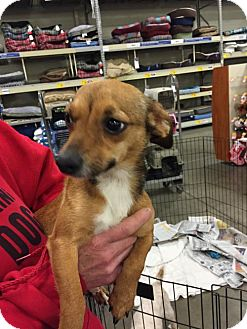 Terrier (Unknown Type, Medium) Mix Dog for adoption in Fresno, California - Hundley