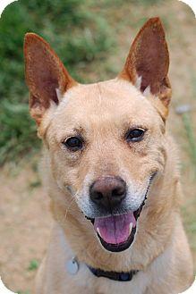 Shepherd (Unknown Type) Mix Dog for adoption in Elyria, Ohio - Guy