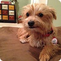 Adopt A Pet :: Dana - Whittier, CA