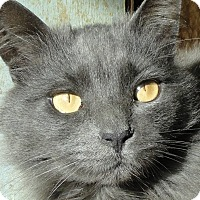 Adopt A Pet :: Violet - St. Johnsville, NY