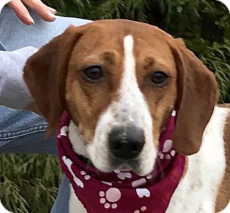 Hound (Unknown Type) Mix Dog for adoption in Evansville, Indiana - Emmy
