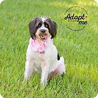 Adopt A Pet :: Buttercup **URGENT - Friendswood, TX