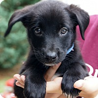 Adopt A Pet :: Prada - West Nyack, NY