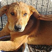 Adopt A Pet :: Churchill - Ogden, UT