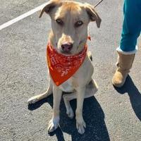 Adopt A Pet :: MurBo - Myrtle Beach, SC