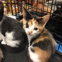 Adopt A Pet :: Whispurr Urgent - Piscataway, NJ