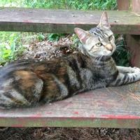 Adopt A Pet :: Clover - Verona, WI