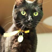Adopt A Pet :: Carl - Columbus, OH