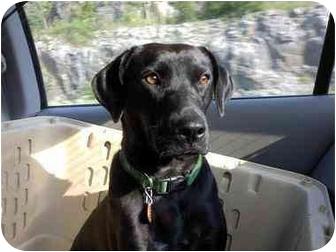 Labrador Retriever Mix Dog for adoption in PORTLAND, Maine - Allie - REDUCED ADOPTION FEE!