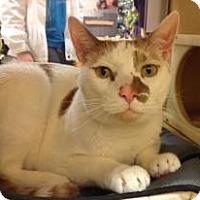 Adopt A Pet :: Stitch - Temple, PA