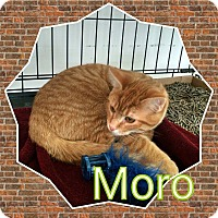 Adopt A Pet :: Moro - West Lafayette, IN