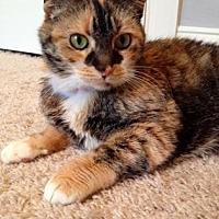 Adopt A Pet :: Flame - Centerville, GA