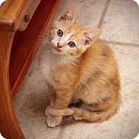 Adopt A Pet :: Nugget - San Antonio, TX