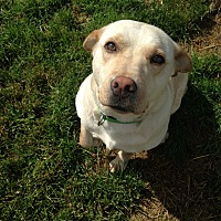 Adopt A Pet :: BASHA - Morris, IL