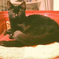 Adopt A Pet :: CILLA - San Diego, CA