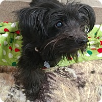 Adopt A Pet :: Zena - Just Precious! - Quentin, PA