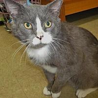 Adopt A Pet :: Ernest, Willow Grove PA - Greenville, DE