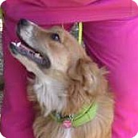 Adopt A Pet :: Bailey - Yucaipa, CA