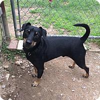 Adopt A Pet :: Wolfie - Franklin, NH