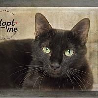Adopt A Pet :: Libby - Belton, MO
