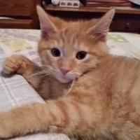 Adopt A Pet :: Trouper - Erie, PA