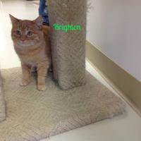 Adopt A Pet :: Brighton - Crossfield, AB