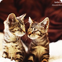 Adopt A Pet :: Gordie & Millie-blind siblings - Xenia, OH
