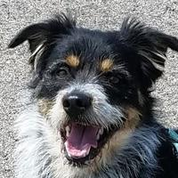 Adopt A Pet :: Chuck - Sheridan, WY