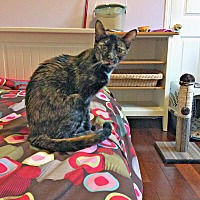 Adopt A Pet :: Clovis - Mississauga, Ontario, ON