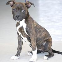 Adopt A Pet :: JJ - Fresno, CA