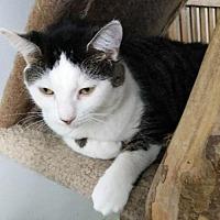 Adopt A Pet :: Ella - Columbus, OH