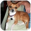 Photo 2 - Chihuahua Mix Dog for adoption in San Diego, California - Paco