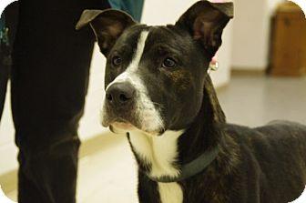 Labrador Retriever Mix Dog for adoption in Elyria, Ohio - KiKi