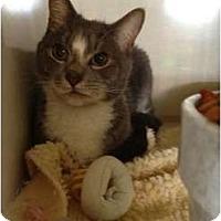 Adopt A Pet :: Ashlund - Wenatchee, WA