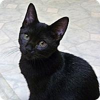 Adopt A Pet :: Slinky - Bedford, MA