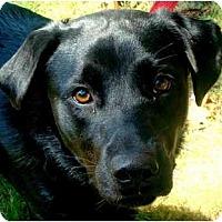Adopt A Pet :: ANNA - Wakefield, RI
