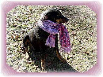 Manchester Terrier/Terrier (Unknown Type, Medium) Mix Dog for adoption in Ozark, Alabama - Parker