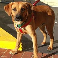 Adopt A Pet :: Makita - Somerset, KY