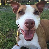 Adopt A Pet :: Lydia - Chico, CA