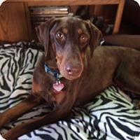 Adopt A Pet :: Jazzy - Palmyra, NE