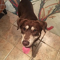 Adopt A Pet :: Bella - BONITA, CA