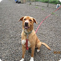 Adopt A Pet :: Banjo - Tillamook, OR