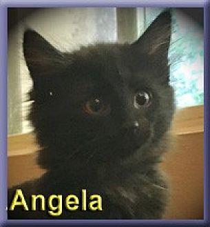 Domestic Mediumhair Kitten for adoption in Aldie, Virginia - Angela