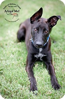 Whippet Mix Dog for adoption in Hickory Creek, Texas - Savannah