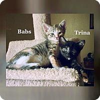 Adopt A Pet :: Trina - Bentonville, AR