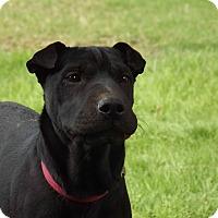 Adopt A Pet :: Ivy - Phoenix, AZ